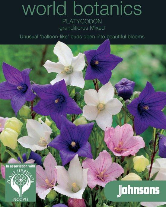 Platycodon grandiflora mixed - set van 5 stuks