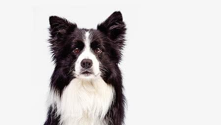 Alles voor honden