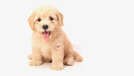 Alles voor puppy's