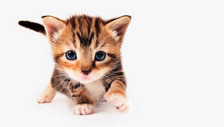 Alles voor kittens