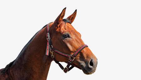 Alles voor paard & ruiter