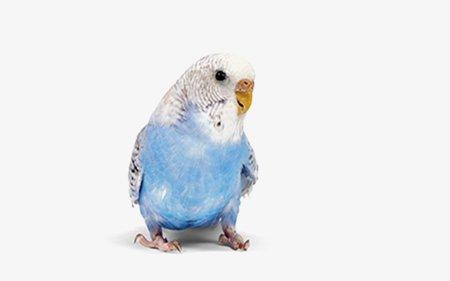 Alles voor vogels