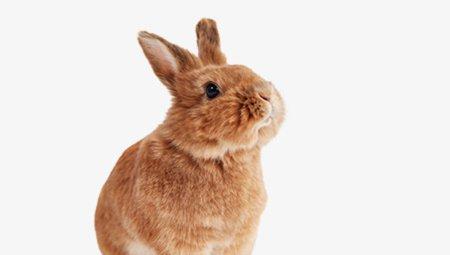 Alles voor konijnen