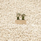 Nel Deserto di Sonora