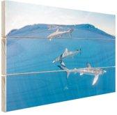 FotoCadeau.nl - Haaien aan de oppervlakte Hout 80x60 cm - Foto print op Hout (Wanddecoratie)