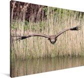 Vale gier vliegt laag over het wateroppervlak Canvas 140x90 cm - Foto print op Canvas schilderij (Wanddecoratie woonkamer / slaapkamer)