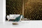 Fotobehang vinyl - Luchtfoto van een weg met bomen breedte 395 cm x hoogte 220 cm - Foto print op behang (in 7 formaten beschikbaar)