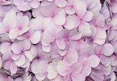 Fotobehang Purple Flowers Floral Design | XXXL - 416cm x 254cm | 130g/m2 Vlies