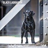 Labrador Retriever Zwart Kalender 2020