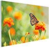 Monarchvlinder op bloem Glas 180x120 cm - Foto print op Glas (Plexiglas wanddecoratie) XXL / Groot formaat!