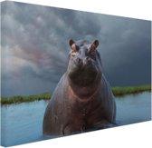 Nijlpaard in het water Canvas 60x40 cm - Foto print op Canvas schilderij (Wanddecoratie woonkamer / slaapkamer) / Dieren Canvas Schilderijen