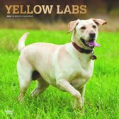 Yellow Labrador Retrievers Kalender 2020