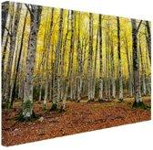 Gele bladeren in het bos in de herfst Canvas 180x120 cm / XXL / Grote Poster - Wanddecoratie cm - Foto print op Canvas schilderij (Wanddecoratie woonkamer / slaapkamer) cm - Foto print op Poster (wanddecoratie)