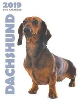 Dachshund 2019 Dog Calendar