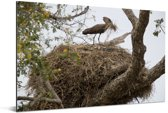 Een hamerkop bij zijn nest Aluminium 90x60 cm - Foto print op Aluminium (metaal wanddecoratie)