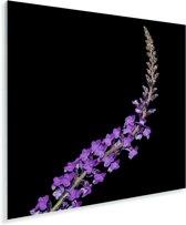 Enkele aromatische lavendel Plexiglas 90x90 cm - Foto print op Glas (Plexiglas wanddecoratie)