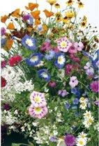 Veldbloemen Mini Wildbloemen eenjarig 25 gram