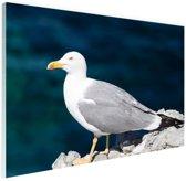 Profiel meeuw op rots Glas 30x20 cm - Foto print op Glas (Plexiglas wanddecoratie)