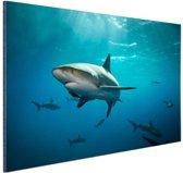 Groep haaien Aluminium 120x80 cm - Foto print op Aluminium (metaal wanddecoratie)