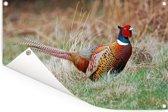 Een kleurrijke fazant in het weiland tijdens de winter Tuinposter 90x60 cm - Tuindoek / Buitencanvas / Schilderijen voor buiten (tuin decoratie)