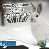 What Do Critters Do in the Winter?