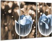 Glasschilderij Tulp | Blauw, Grijs | 120x80cm 3Luik | Foto print op Glas |  F005149