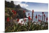 Aloë Vera langs de kust Big Sur in Amerika Aluminium 180x120 cm - Foto print op Aluminium (metaal wanddecoratie) XXL / Groot formaat!