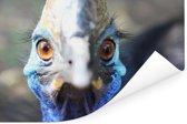 Een blauwe Emoe kijkt recht in de camera Poster 180x120 cm - Foto print op Poster (wanddecoratie woonkamer / slaapkamer) XXL / Groot formaat!