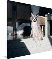 Zonnestralen op de Sphynx kat Canvas 90x90 cm - Foto print op Canvas schilderij (Wanddecoratie woonkamer / slaapkamer) / Huisdieren Canvas Schilderijen