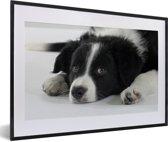 Foto in lijst - Border Collie hond liggend op de vloer fotolijst zwart met witte passe-partout 60x40 cm - Poster in lijst (Wanddecoratie woonkamer / slaapkamer)