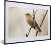 Foto in lijst - Een tjiftjaf zit hoog in een boom fotolijst zwart met witte passe-partout klein 40x30 cm - Poster in lijst (Wanddecoratie woonkamer / slaapkamer)