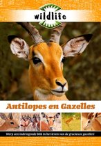 Wildlife - Antilopes En Gazelles