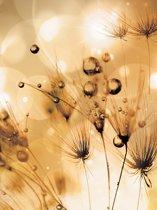 Fotobehang Dandelion | XXL - 206cm x 275cm | 130g/m2 Vlies