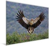 Secretarisvogel met nestmateriaal in zijn snavel Canvas 180x120 cm - Foto print op Canvas schilderij (Wanddecoratie woonkamer / slaapkamer) XXL / Groot formaat!