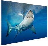 Grote witte haai Aluminium 120x80 cm - Foto print op Aluminium (metaal wanddecoratie)