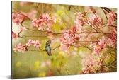 Kolibrie op een tak van een boom met de lente roze bloesems Aluminium 90x60 cm - Foto print op Aluminium (metaal wanddecoratie)