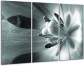 Glas schilderij Bloem | Grijs, Groen | 120x80cm 3Luik | Foto print op Glas |  F006395