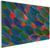 Detail veren papegaai Glas 120x80 cm - Foto print op Glas (Plexiglas wanddecoratie)