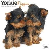 Yorkshire Terrier Puppies 2020 Mini Wall Calendar
