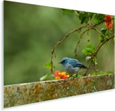 Een blauwe Azuurvliegenvanger op een stenen muurtje Plexiglas 60x40 cm - Foto print op Glas (Plexiglas wanddecoratie)