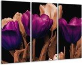 Canvas schilderij Tulp | Paars, Bruin, Zwart | 120x80cm 3Luik