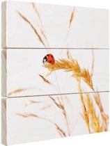 Lieveheersbeestje op gras Hout 80x60 cm - Foto print op Hout (Wanddecoratie)