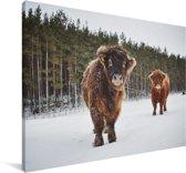 Twee Schotse hooglander kalfjes Canvas 90x60 cm - Foto print op Canvas schilderij (Wanddecoratie woonkamer / slaapkamer) / Wilde dieren Canvas Schilderijen