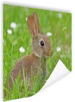 Haas in het gras afdruk Poster 60x40 cm - Foto print op Poster (wanddecoratie woonkamer / slaapkamer) / Dieren Poster