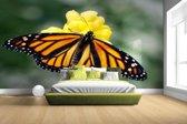 Fotobehang vinyl - Monarchvlinder breedte 380 cm x hoogte 265 cm - Foto print op behang (in 7 formaten beschikbaar)