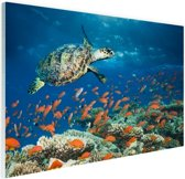 Koraalrif met schildpad Glas 90x60 cm - Foto print op Glas (Plexiglas wanddecoratie)