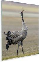 Europese kraanvogel kijkt omhoog in de lucht Plexiglas 80x120 cm - Foto print op Glas (Plexiglas wanddecoratie)