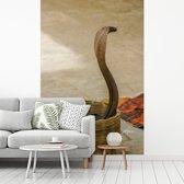 Fotobehang vinyl - Indische cobra slang in een mand breedte 270 cm x hoogte 400 cm - Foto print op behang (in 7 formaten beschikbaar)