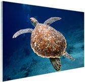 Zeeschildpad  Glas 90x60 cm - Foto print op Glas (Plexiglas wanddecoratie)