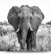 Glasschilderij Afrikaanse olifant op de savanne
